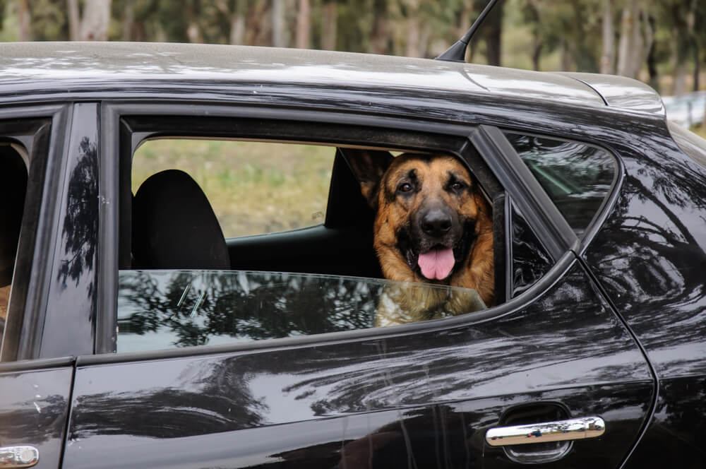 veja-como-transportar-seu-animal-de-estimacao-com-seguranca-no-carro.jpeg