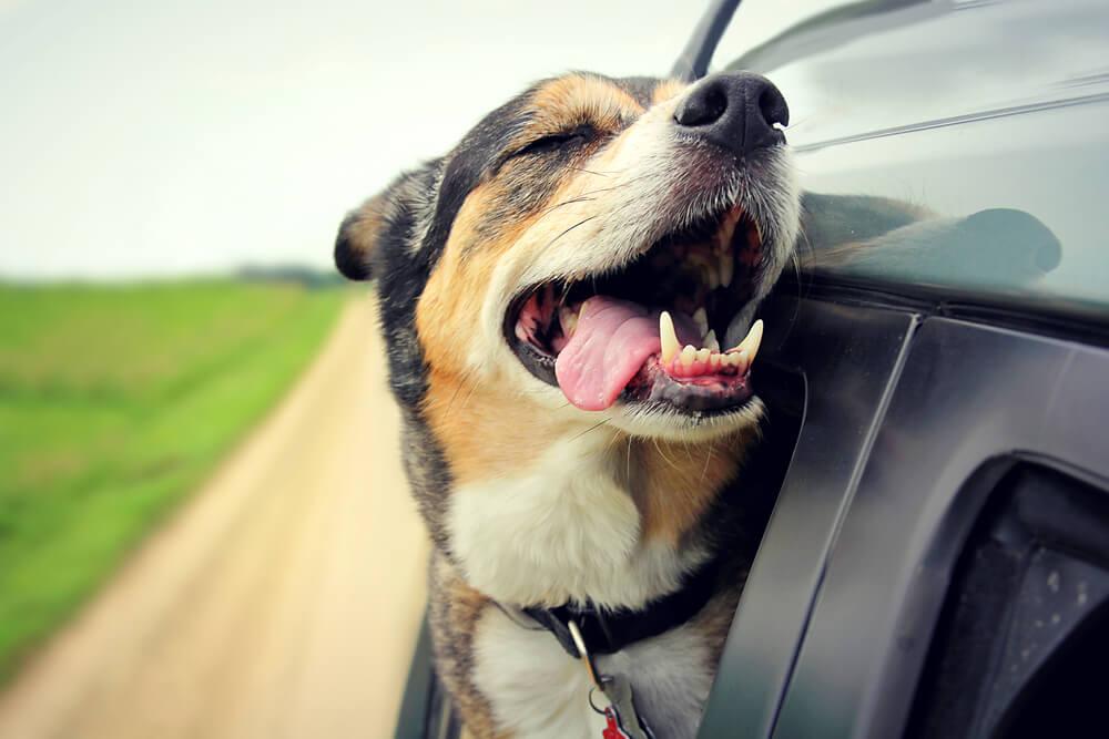 5-dicas-para-viagens-longas-de-carro-com-animais.jpeg