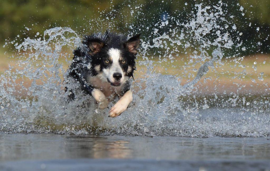 cachorro correndo feira de adoção de cães e gatos do Portal Auto Shopping